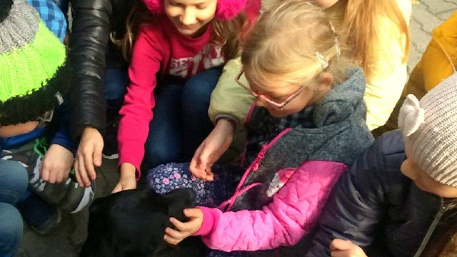 Międzynarodowy Dzień Zwierząt w świetlicy szkolnej